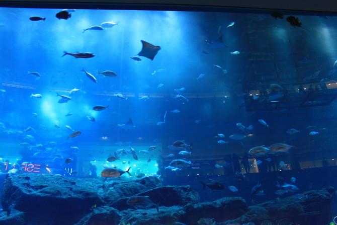 Dubai mall 水族缸.jpg