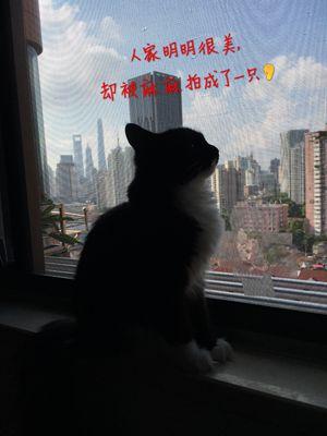 IMG_4736_副本.jpg